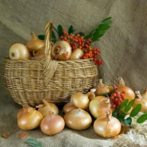depositphotos_5714435-Onion-in-basket